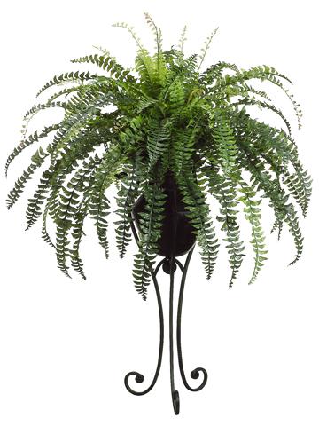 Fern in Planter