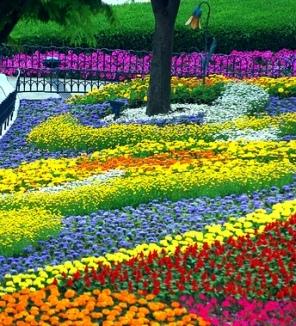 flower bed gardening tips