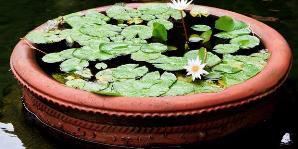 creative water gardens