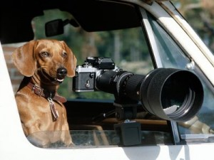 Top 10 things you need for a new puppy digital camera