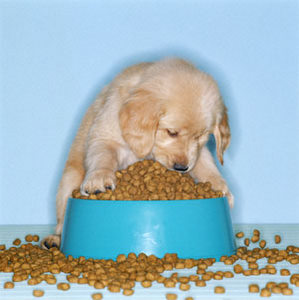 Top 10 things you need for a new puppy food