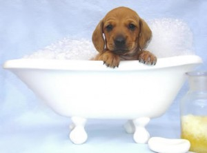 Top 10 things you need for a new puppy shampoo