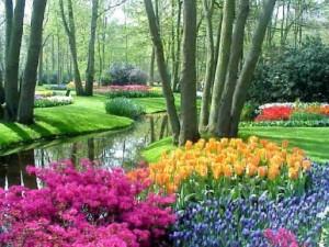 best of flower beds colorful tulip garden
