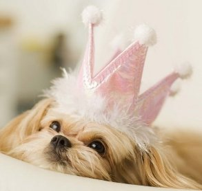 ways to spoil your dog