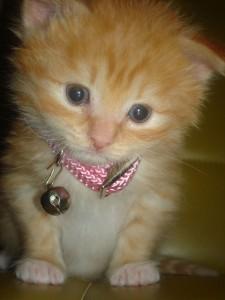 kitten with pink collar
