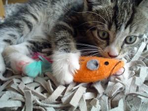 kitten with orange toy