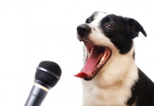 pet news channel