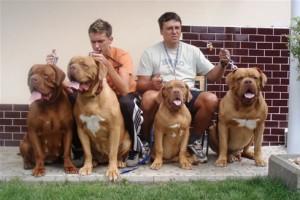 top 10 largest dog breeds Dogue de Bordeaux