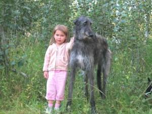 top 10 largest dog breeds Scottish Deerhound