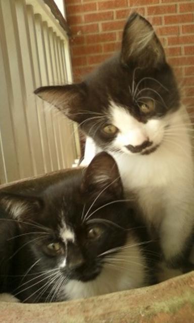 Cat Owner Forum