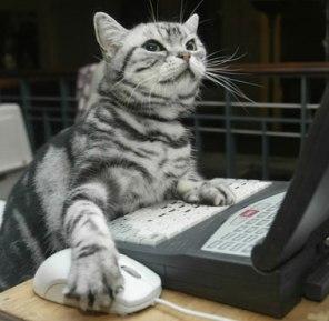 Cat forums