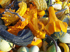 Gourds and mini pumpkins