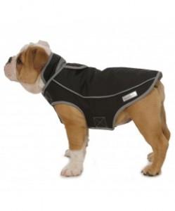dog in weatherproof parka