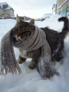 top 10 winter weather safety tips think of pets