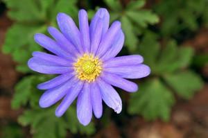 Grecian wildflowers