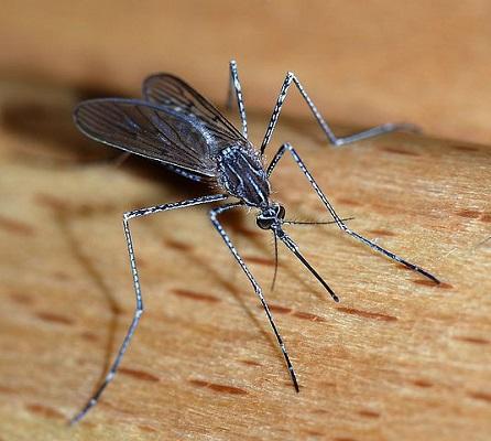 Don't Let 'Em Bug You!