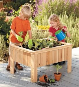 Plant an Autumn Garden