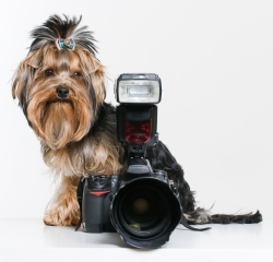 Pose For A Photo