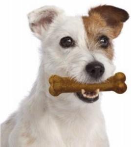 Oral hygiene chews
