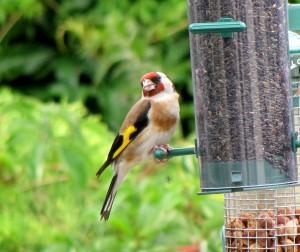 bird at feeder