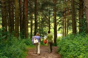 people walking in woods