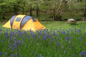 camping tent in field