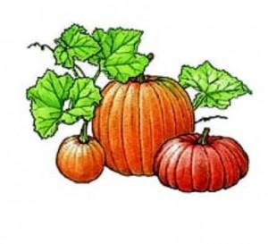 Lady Godiva Pumpkins