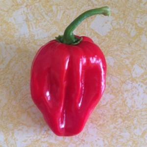 peppers from Pepper Joe's