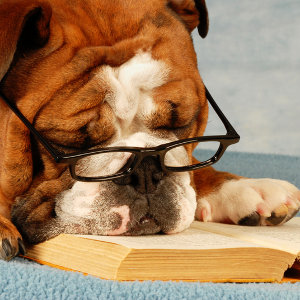 old dog reading book