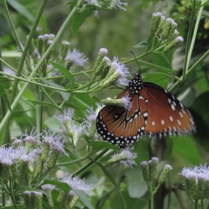 native plants and butterfy