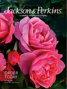 jackson and perkins catalog