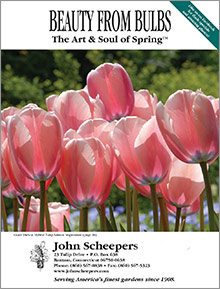 john scheepers beauty from bulbs catalog