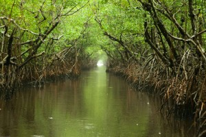 everglades places to visit in florida