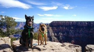 vacation spots for owners and dogs