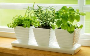 indoors herbs for your kitchen