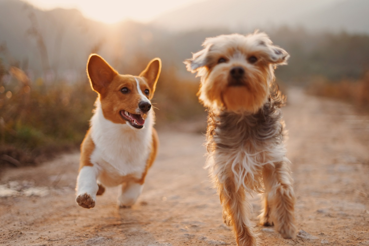 The Importance of Pet Health and Medication