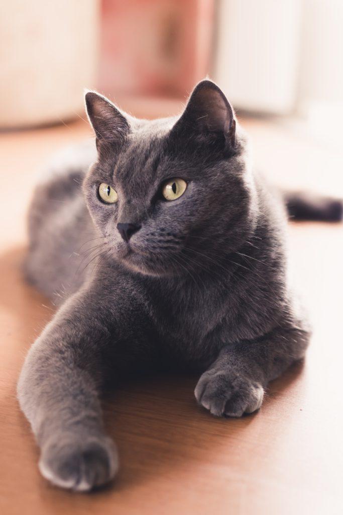 cute cat pet