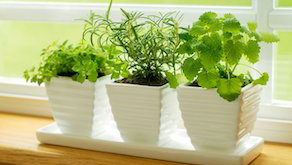 Indoor Herbs for Your Kitchen