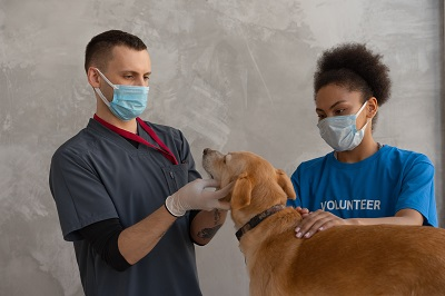 is pet health insurance worth the cost