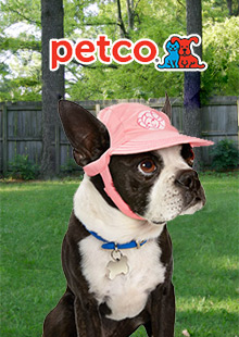 petco dogs and pets